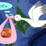 空飛ぶキムチ