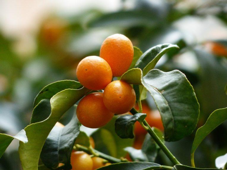 蜂蜜と金柑のタッグ~秋の養生
